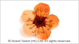 Mini Natural Plum Blossom Pressed Flowers