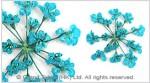Mini Natural Gypsophila Pressed Flowers