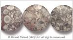 Fossil Crinoid